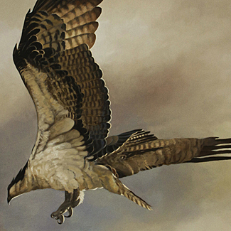 Osprey - Oil on Canvas - 24 x 36 - $40,000<br />