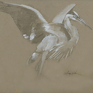 Study for Blue Heron - Pencil & Casein on Paper - 12 x 11 - SOLD<br />