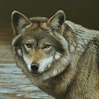 Amber Eyes - Oil on Canvas - 18 x 36 - Commission<br />